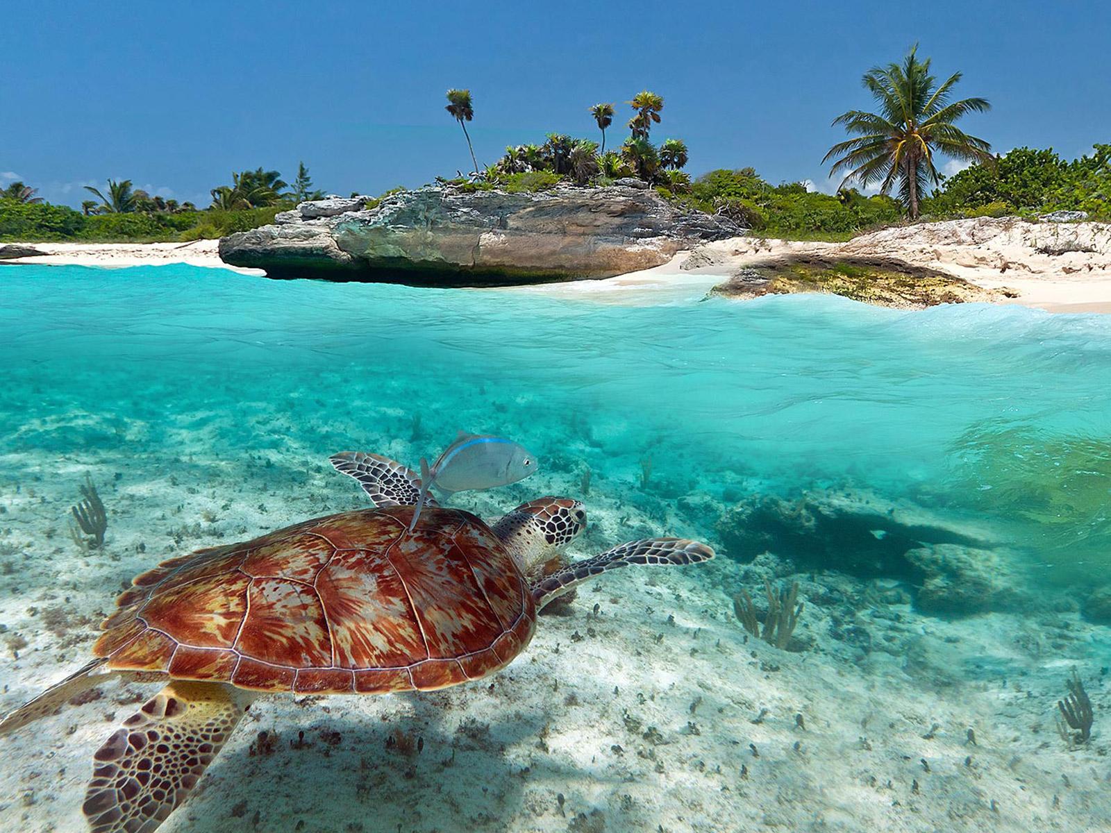 Playas Y Cenotes Las 10 Mejores De La Riviera Maya Hermoso Paraíso